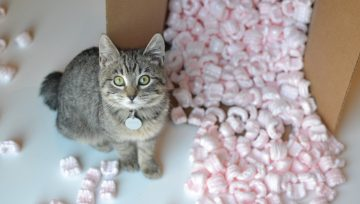 Residential Moving: 4 Tips for Moving with Pets