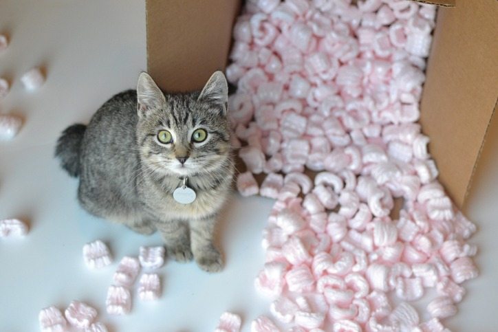moving with pets tips